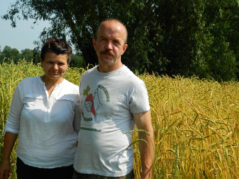 Bogdan i Elżbieta Chara na polu z pszenicą orkiszową ozimą